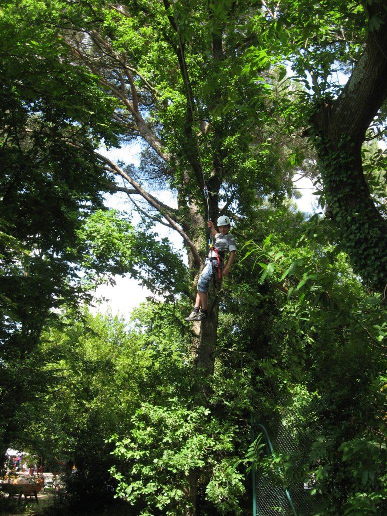 escalad'arbre escalade dans les arbres